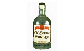 Old Scenter White Dog